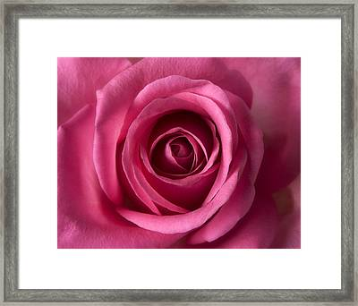 Pink Perfection - Roses Flowers Macro Fine Art Photography Framed Print by Artecco Fine Art Photography