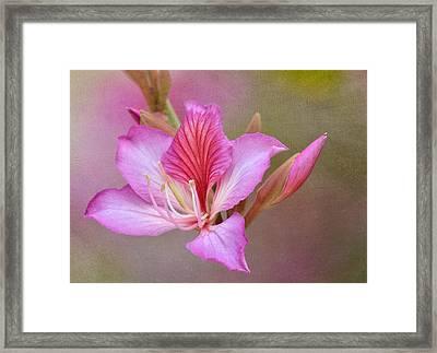 Pink Persuasion Framed Print by Fraida Gutovich