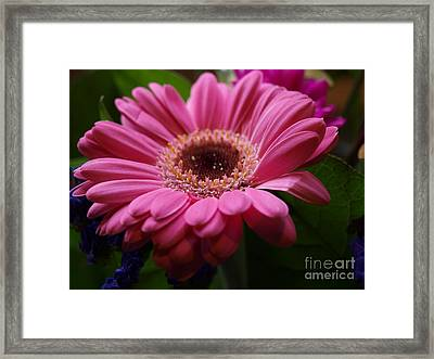 Pink Petal Explosion Framed Print