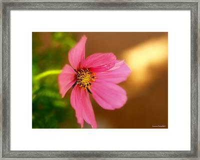 Pink Petals Framed Print by Alexandra  Rampolla