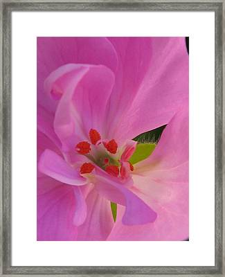 Pink Petals II Framed Print by Tracy Male