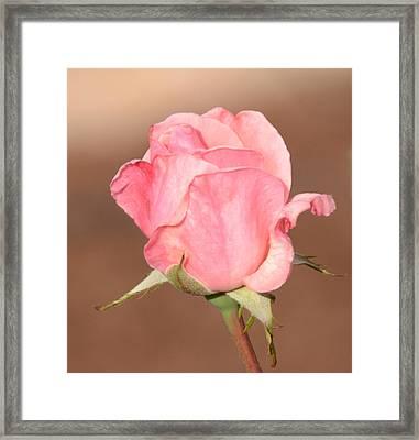 Pink Petals Framed Print by Julie Cameron