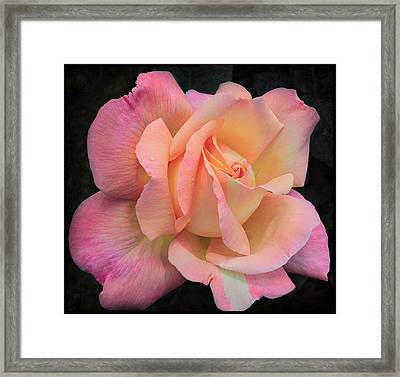 Framed Print featuring the photograph Pink Petals by Kim Andelkovic