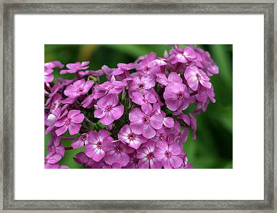 Pink Petals With Green Bokeh Framed Print by Gene Walls