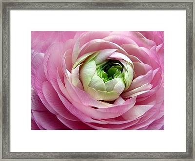 Pink Petticoat  Framed Print by Jessica Jenney