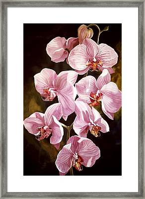 Pink Phalaenopiss Orchids Framed Print