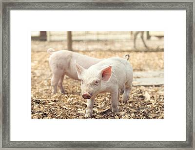 Pink Piglet Framed Print by Stephanie McDowell