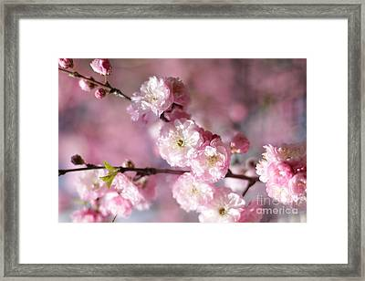 Pink Plum Branch 1 Framed Print