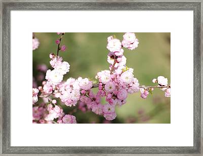 Pink Plum Branch On Green 2 Framed Print