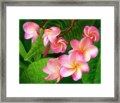 Pink Plumeria Framed Print by Ben and Raisa Gertsberg