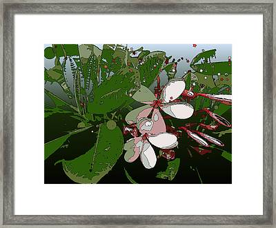 Pink Plumeria Framed Print by Stacy Vosberg