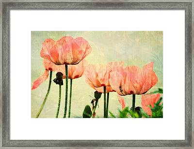Framed Print featuring the photograph Pink Poppies In The Garden by Peggy Collins