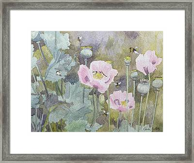 Pink Poppies With Bees Framed Print by Rosalie Bullock