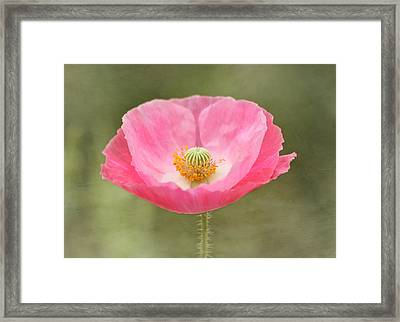 Pink Poppy Flower Framed Print by Kim Hojnacki
