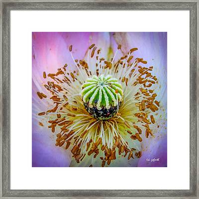 Pink Poppy Squared Framed Print by TK Goforth