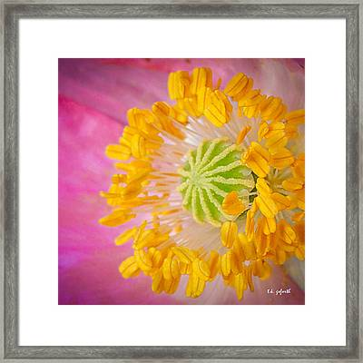Pink Poppy Too Squared Framed Print by TK Goforth