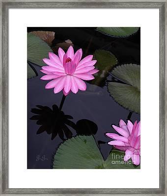 Pink Pose Framed Print by Geri Glavis