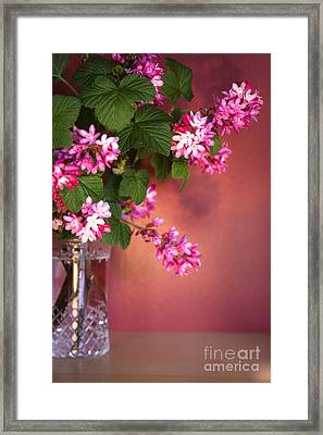 Pink Posy Framed Print by Jan Bickerton