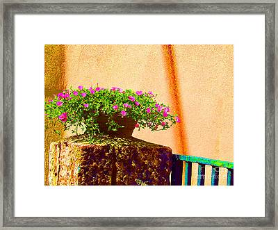 Pink Potted Flowers And Bench Framed Print by Tina M Wenger