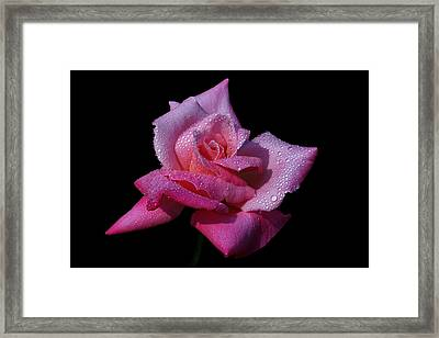 Framed Print featuring the photograph Fuchsia by Doug Norkum
