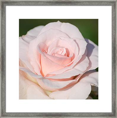 Pink Promise Framed Print by Nancy Edwards