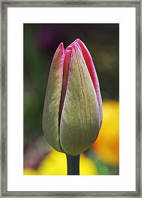 Pink Promise Framed Print by Rona Black