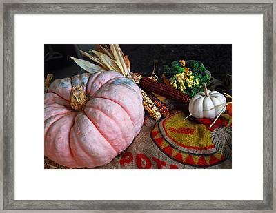Pink Pumpkin Framed Print