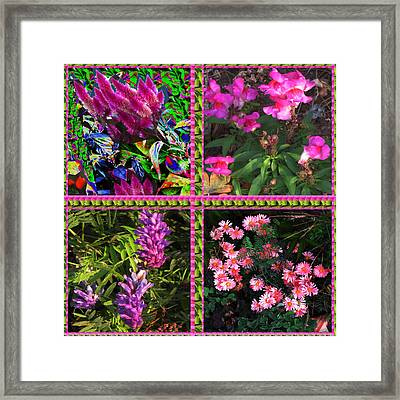 Pink Purple Flowers Captured At The Riverside Ridge At Oakville Ontario Canada Collage Beautiful     Framed Print by Navin Joshi