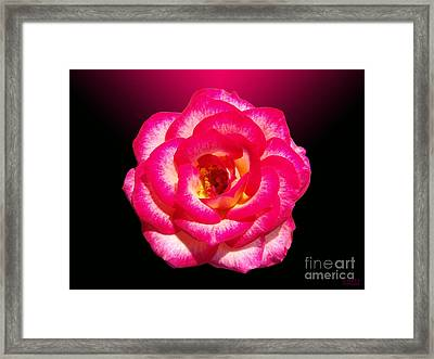 Framed Print featuring the photograph Pink Queen  by Hanza Turgul