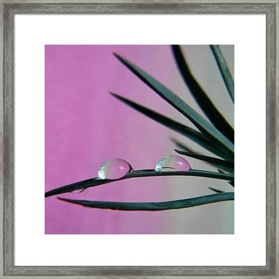 Pink Rain Drops Framed Print by Barbara St Jean