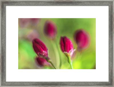 Pink Red Buds Framed Print by Arkady Kunysz