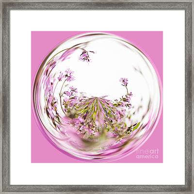 Pink Red Campion Framed Print by Anne Gilbert