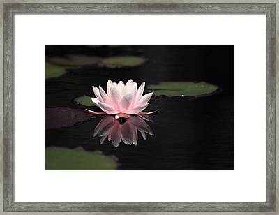 Pink Reflection Framed Print by Katherine White