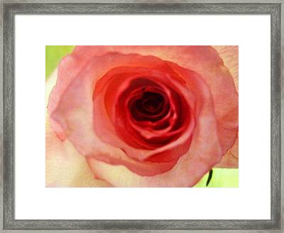 Framed Print featuring the photograph Pink Rose by Alohi Fujimoto
