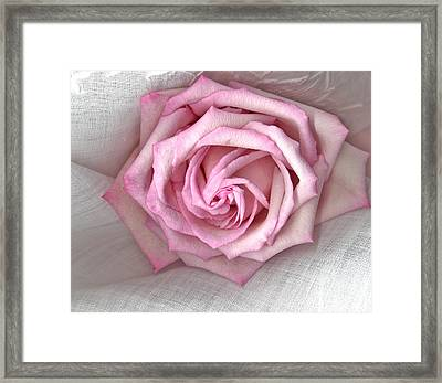 Pink Rose And Linen Framed Print by Sandra Foster