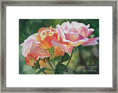Pink Rose Buds And Blossoms Framed Print