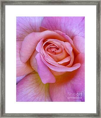 Pink Rose Close-up Framed Print