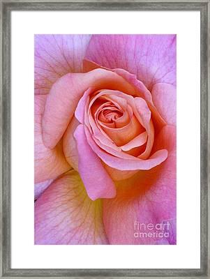 Pink Rose Closeup II Framed Print