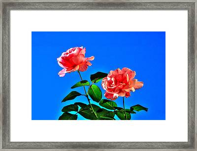 Framed Print featuring the photograph Pink Rose by Ed Roberts