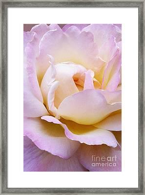 Pink Rose Forming Framed Print