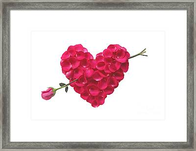 Pink Rose Heart Valentine Framed Print by Boon Mee
