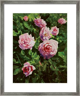 Pink Rose Framed Print