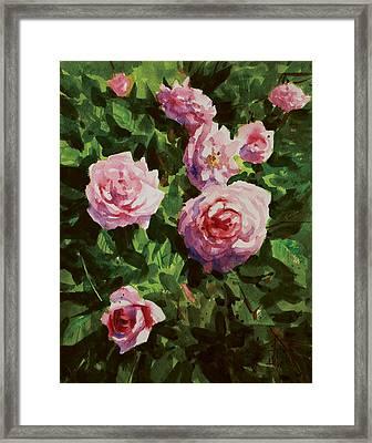 Pink Rose Framed Print by Helal Uddin