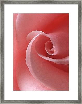 Pink Rose II Framed Print