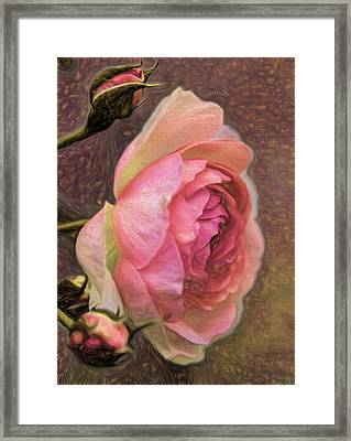 Pink Rose Imp 1 - Artistic Pink Rose With Buddies Framed Print