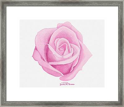 Pink Rose Framed Print by James M Thomas