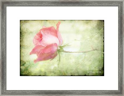 Pink Rose Framed Print by Joan McCool