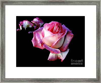 Framed Print featuring the photograph Pink Rose  by Leanne Seymour