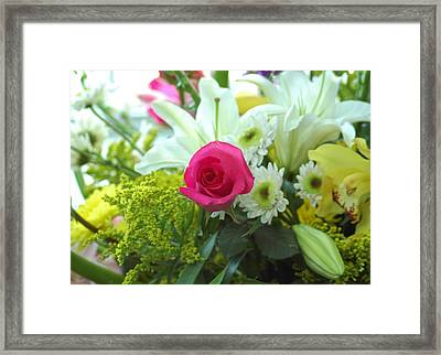 Pink Rose Framed Print by M West