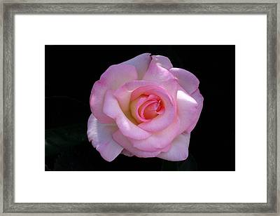 Framed Print featuring the photograph Pink Rose On Black by David Rizzo